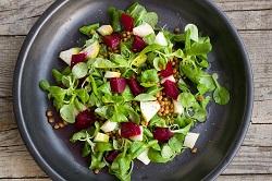 Auf dem Foto ist ein Teller Salat zu sehen. Der Salat besteht aus Feldsalat, klein geschnittenen Apfelstücken, rotes Beete, die gewürfelt wurde, und roten Linsen. Am Rand des Salates, besonders links unten zu erkennen, sieht man eine klare Flüssigkeit. Das lässt daraus schließen, dass Öl als Dressing verwendet wurde.