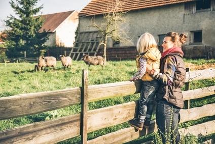 Fleisch_kosnum_Nachhaltigkeit_Wiese_Bauernhof