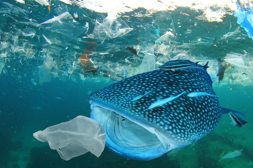 Müll_Plastik_Meer_Nchhaltigkeit_Fotolia