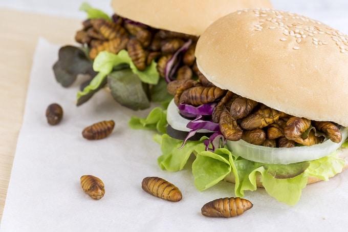 Burger Insekten Proteine