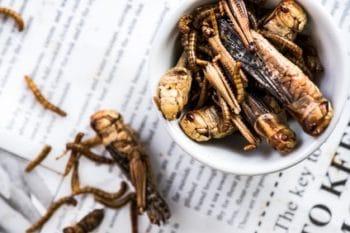 Insekten essen Heuschrecken gegrillt