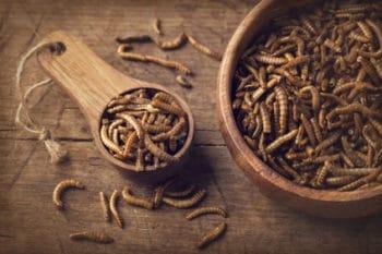 Insekten Mehlwürmer essen gegrillt