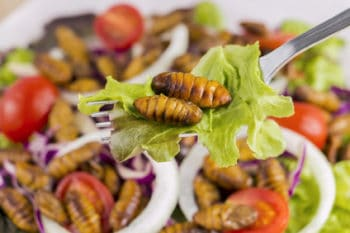Insekten Salat Topping gegrillt