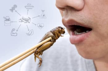 Insekten essen Spieß Nährwerte
