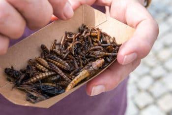 Insekten gegrillt Snack essen Schale