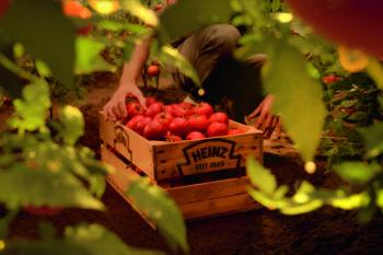 Bio Tomatenkiste auf einem Tomatenfeld