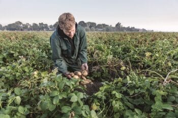 Chef´s Harvest Kartoffelanbau Mann mit Kartoffel in der Hand