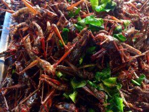 Grashüpfer Frittiert Street Food Thailand