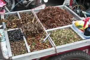 Frittierte Heuschrecken Street Food Thailand