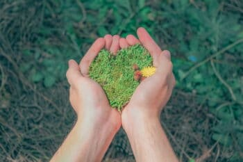 Umweltschutz grünes herz aus Moos in den Händen / snackconnection