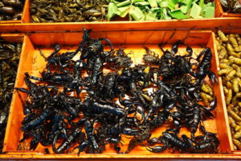 fried scorpions / snackconnection